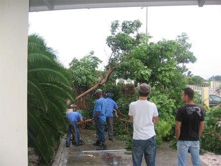 Familie Pragt - Een omgewaaide boom bij Julianadorp