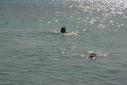 Snorkelaars