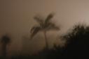 Versgeperst.com Orkaan Tomas NIEUWS dode Curaçao  Palm in storm Tomas
