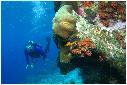 duiken, koraal