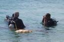 shere leito duiken