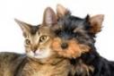 Versgeperst.com Versgeperst stichting dierenbescherming curacao SDBC LIFESTYLE identificatiechip dierenasiel Curaçao adoptie  huisdieren