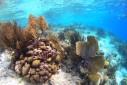 Bonaire Marine Park