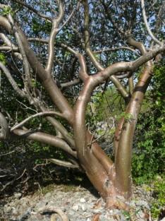 natuur boom