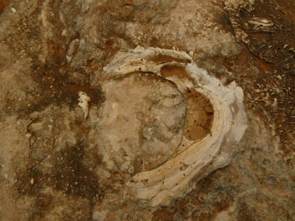 fossiel paleontologie