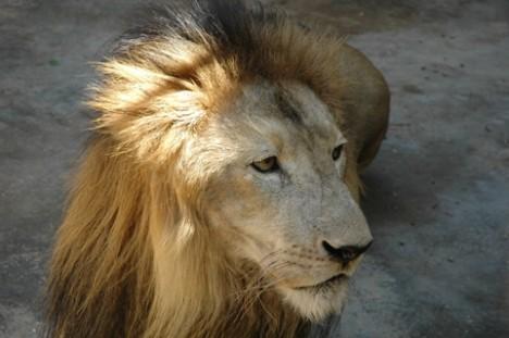 king, leeuw parke tropical