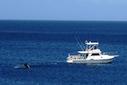 thumb walvis